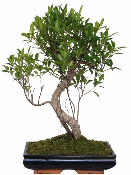 Piante tropicali da interno ed esterno Paganopiante, piante verdi ...