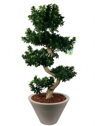 "BONSAI F. GINSENG ""S"" SHAPE 130 CM. IN CHIRON D. 60 (cenere o antracite)"